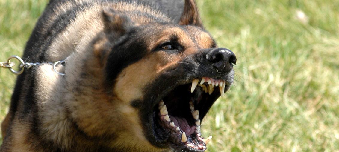 Злобни кучета